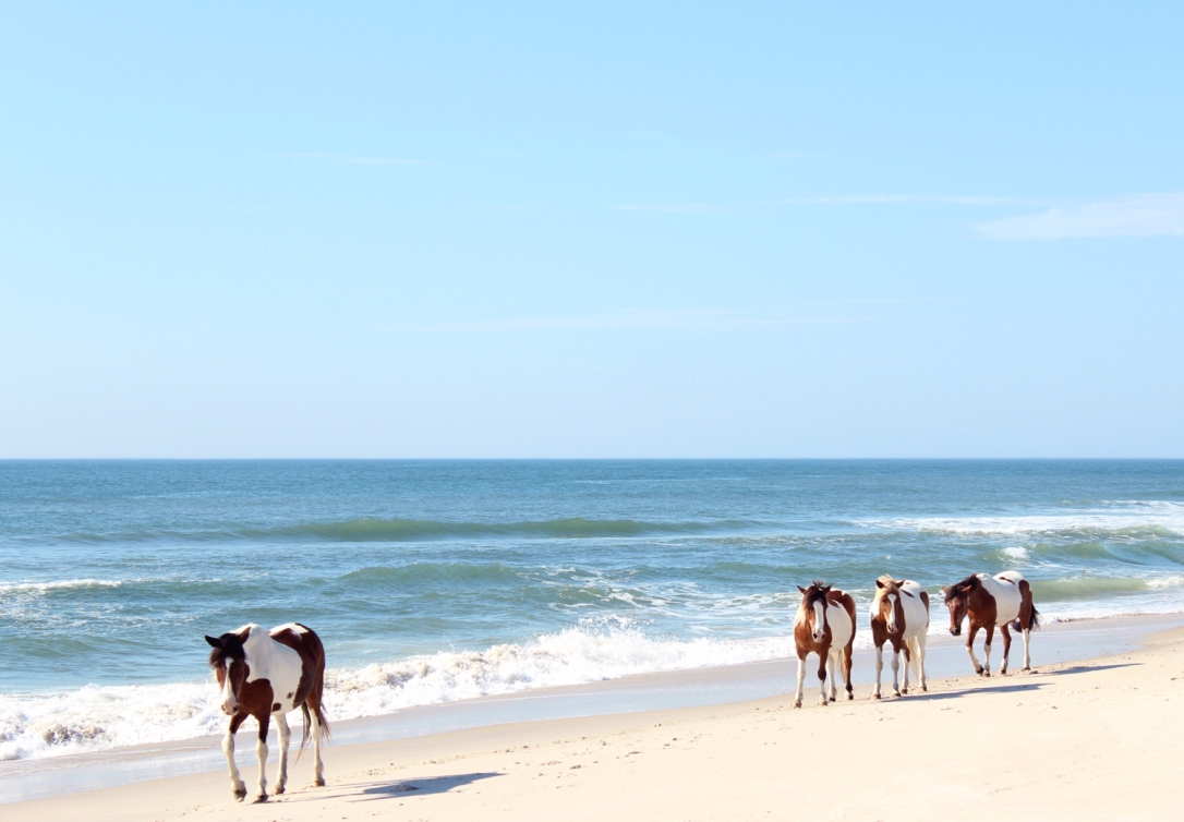 AssateagueDream